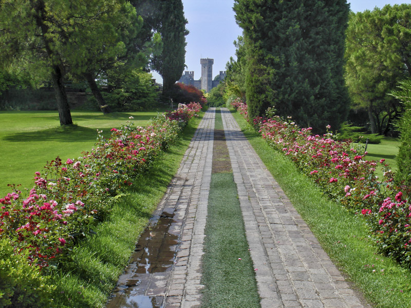 Roses blooming along on of the main paths in the Sigurtà garden.