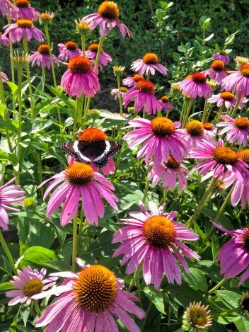 IMG_6301-Botanical-Gardens-Niagara