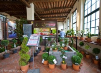 A gift show located beside the entrance to the Villa Garzoni gardens. It offers many beautiful topiaries for sale.